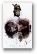 Antony Micallef  - click to visit artists gallery ->