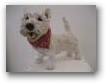 Westie with scarf  - click to visit artists gallery ->